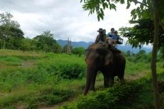 פילים1